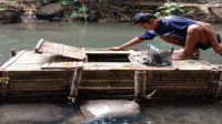 ikan nila keramba